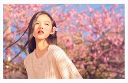 Ngất ngây chiêm ngưỡng sắc hoa anh đào Nhật Bản tại Sapa