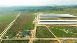 Tổ hợp trang trại tại Lào của Vinamilk đẩy nhanh tiến độ hoàn thành giai đoạn I