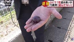 Cụ ông 73 tuổi bị cảnh sát bắt vì ăn trộm một quả nho