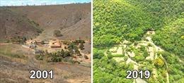Cặp vợ chồng người Brazil tái sinh khu rừng chết trong suốt 20 năm
