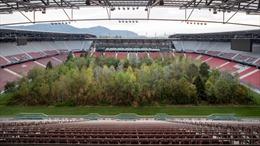 Độc đáo rừng cây mọc giữa sân bóng đá