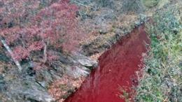 Nước sông tại Hàn Quốc bất ngờ hóa đỏ màu máu