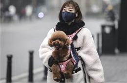 Hàng nghìn thú cưng bị mắc kẹt, nguy cơ chết đói giữa tâm dịch Vũ Hán