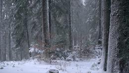 Chạy trốn lệnh phong tỏa, cặp đôi Tây Ban Nha bị hạ thân nhiệt vì gặp bão tuyết