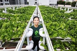 Singapore trồng rau, phủ xanh sân thượngnhà để xe
