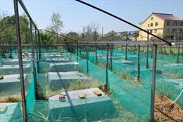 Giới chức Trung Quốc mua lại động vật hoang dã từ nông dân