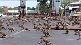 Người dân Thái Lan tìm cách giành quyền kiểm soát thành phố từ tay loài khỉ