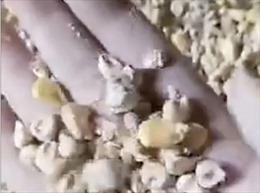 Video ngô mốc trắng trong kho dự trữ Trung Quốc dấy lên lo ngại về an ninh lương thực