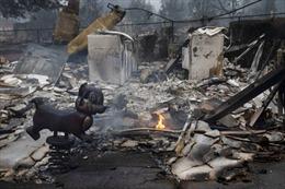 Cháy rừng tiếp tục hoành hành miền Tây nước Mỹ, ít nhất 33 người chết