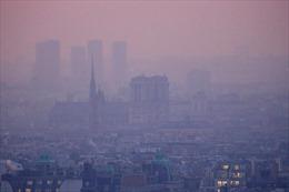 Ô nhiễm không khí có thể tàn phá não người trẻ tương tự bệnh Alzheimer