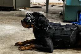 Quân đội Mỹ nghiên cứu phát triển kính thực tế AR cho chó nghiệp vụ