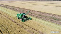 Mô hình nông trại sử dụng 100% máy móc tự động tại Trung Quốc