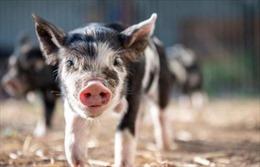 Phát hiện động vật có vú có thể hấp thụ oxy qua hậu môn