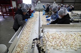 Doanh nghiệp Mỹ gặp khó với yêu cầu xác minh tình trạng tiêm chủng của người lao động