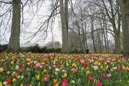 Rực rỡ triển lãm hoa quốc tế thường niên lần thứ 18 ở Bỉ