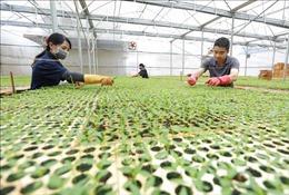 Hình thành vùng sản xuất nông sản hàng hóa theo nhu cầu thị trường