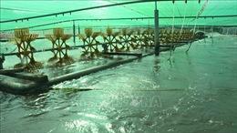 Xây dựng Bạc Liêu trở thành trung tâm công nghiệp tôm cả nước