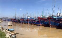 100% tàu cá tại Bình Địnhphải có giấy chứng nhận an toàn thực phẩm trong tháng 6