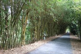 Đồng Tháp quy hoạch khu bảo tồn các giống tre Việt Nam