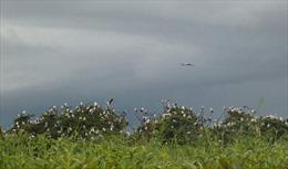 Chim hoang dã chết hàng loạt vì bệnh cúm gia cầm tại Campuchia