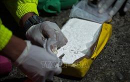 Thu giữ hơn 2 tấn cocaine được giấu trong một container chuối