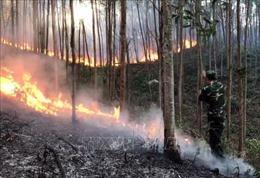 Phú Yên: Dập tắt đám cháy rừng ở núi Rọ Hươu