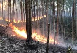 Dập tắt vụ cháy gây thiệt hại khoảng 30 ha rừng ở Uông Bí, Quảng Ninh