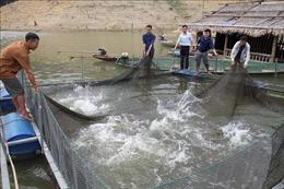 Nghệ An: Sinh kế mới cho người dân tái định cư hồ thủy điện