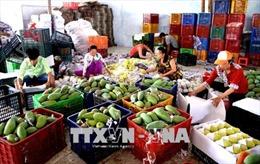 Trái cây Việt từng bước chinh phục thị trường thế giới