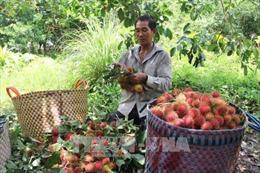 Nâng cao chuỗi giá trị trái cây đặc sản - Bài 2: Chất lượng sản phẩm gắn liền thị trường