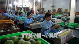 Nâng cao chuỗi giá trị trái cây đặc sản - Bài 1: Liên kết sản xuất là khâu quan trọng
