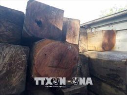 Phú Yên phát hiện, xử lý nhiều vụ vận chuyển gỗ trái phép