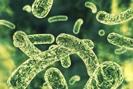 Siêu vi trùng kháng thuốc lan rộng trong các bệnh viện trên toàn thế giới