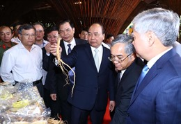 Thủ tướng: Sâm Ngọc Linh là thương hiệu Quốc gia của Việt Nam
