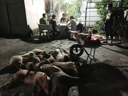 Làm rõ đường dây giết mổ, mua bán lợn bệnh tại Đồng Nai