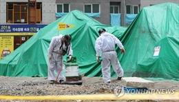 Phát hiện ổ kiến lửa đỏ có thể gây chết người ở Hàn Quốc