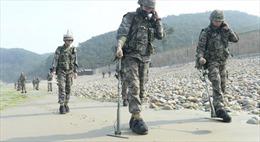 Hai miền Triều Tiên bắt đầu gỡ mìn trong khu vực phi quân sự