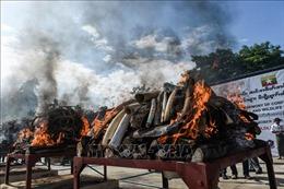 Myanmar tiêu hủy hơn 1 tấn bộ phận động vật hoang dã