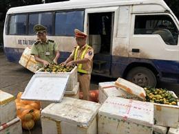 Vận chuyển trái phép 1.395kg hoa quả