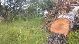 Khẩn trương kiểm tra, xác minh các vụ phá rừng tại Bình Thuận
