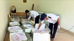Ô tô chở khách vận chuyển hơn 500kg nội tạng lợn sử dụng giấy kiểm dịch giả