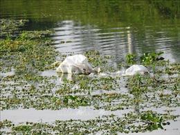 Tây Ninh: Ngang nhiên thả lượng lớn rác thải xuống lòng kênh
