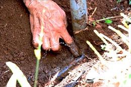 Đắk Nông hỗ trợ nông dân lắp đặt hệ thống tưới nhỏ giọt