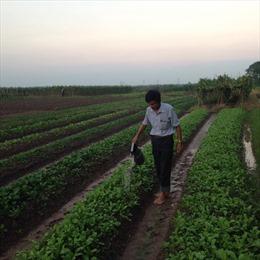Đại hội VII Hội Nông dân Việt Nam: Lan tỏa phong trào nông dân làm giàu trong sản xuất nông nghiệp