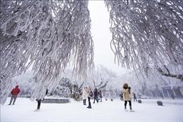 Chiêm ngưỡng phong cảnh tuyết rơi đầu đông tuyệt đẹp