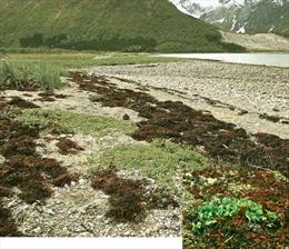 Khả năng hấp thu CO2 của thảm thực vật ở Bán cầu Bắc suy giảm mạnh