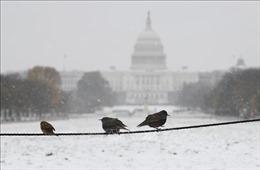 Bão tuyết di chuyển về phía thủ đô của Mỹ