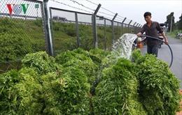Cung ứng gần 100.000 tấn rau màu phục vụ thị trường Tết