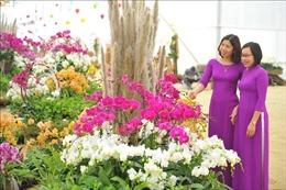 Chùa Bái Đính mở cửa đón khách tham quan thung lũng hoa rộng 15 ha