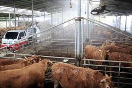 Hàn Quốc hủy lệnh cấm vận chuyển gia súc trên phạm vi toàn quốc